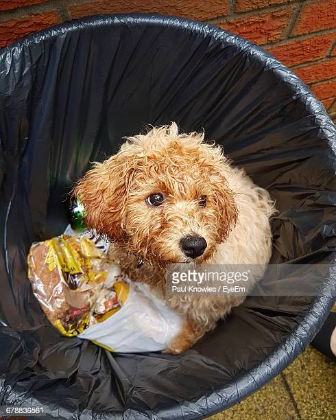 Portrait Of A Dog In A Garbage Can