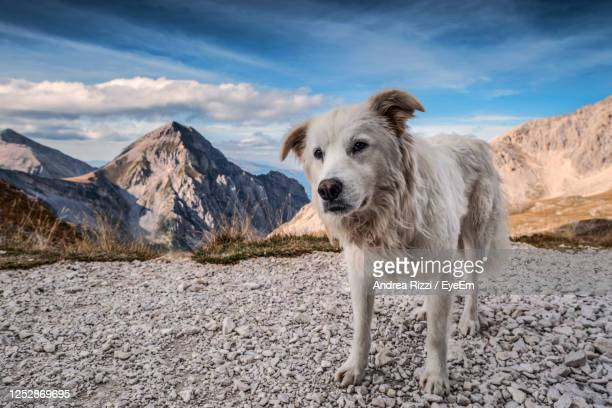 portrait of a dog on mountain against sky - andrea rizzi stockfoto's en -beelden