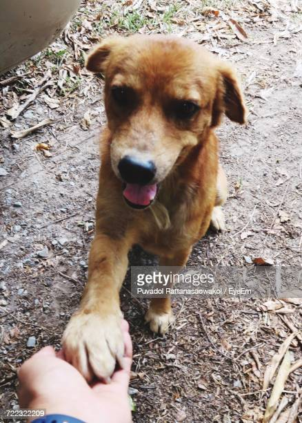 portrait of a dog - paw stock pictures, royalty-free photos & images