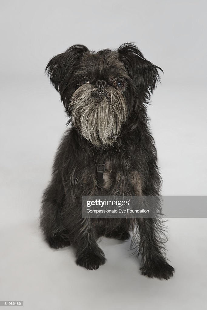 portrait of a dog : Stock Photo