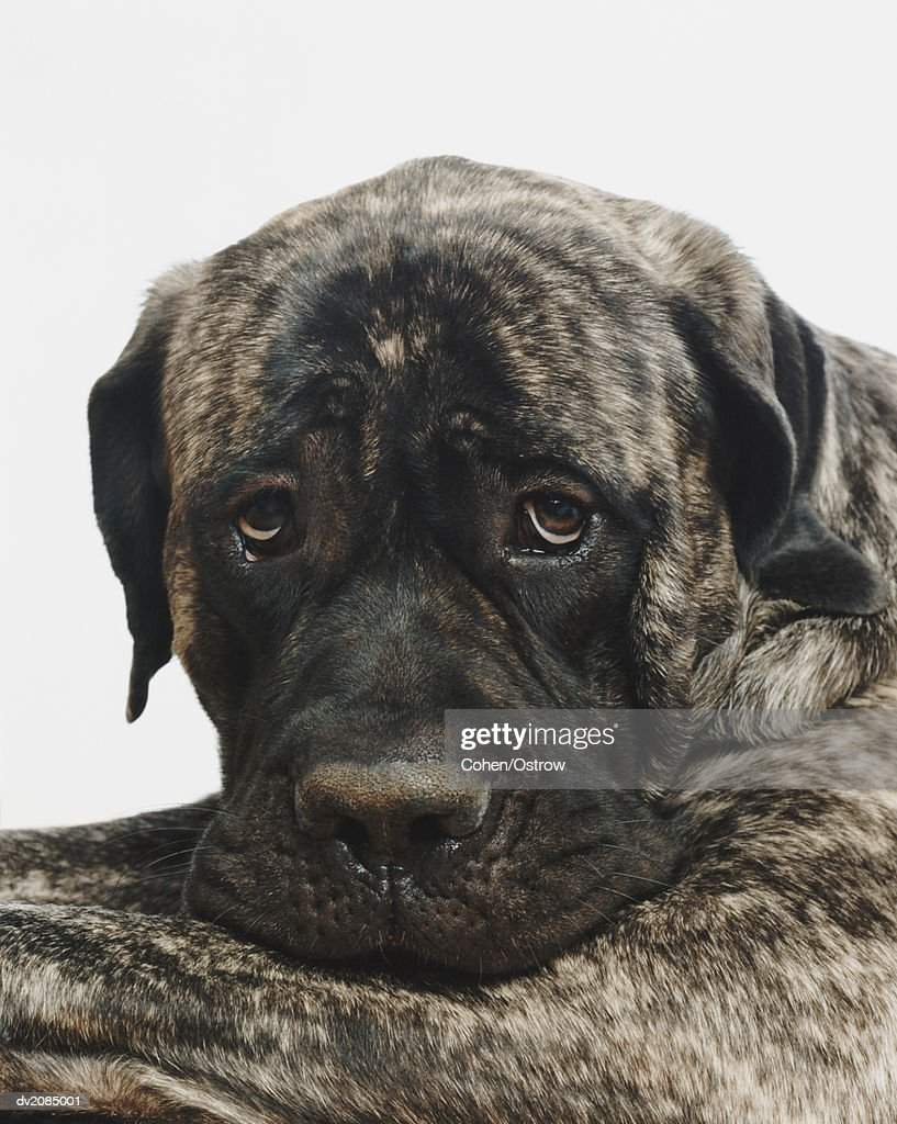 Portrait of a Dog : Stock Photo