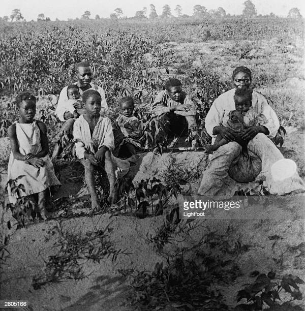 Portrait of a family of AfricanAmerican cotton pickers sitting in a field probably in Georgia late 19th Century