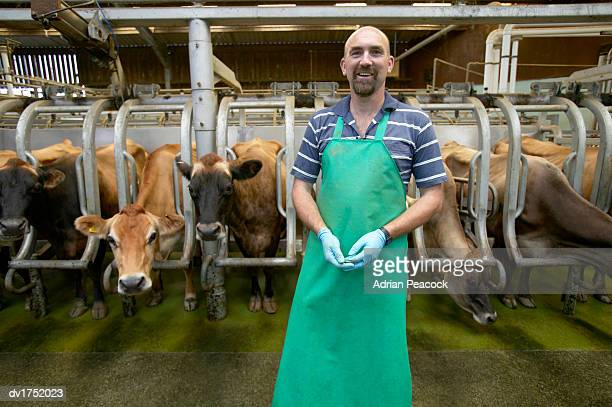 Portrait of a Farm Worker Standing in a Protective Apron in Front of a Barn of Cows