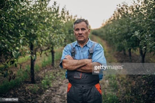 porträt eines landwirts in einem obstgarten - apfelbaum stock-fotos und bilder