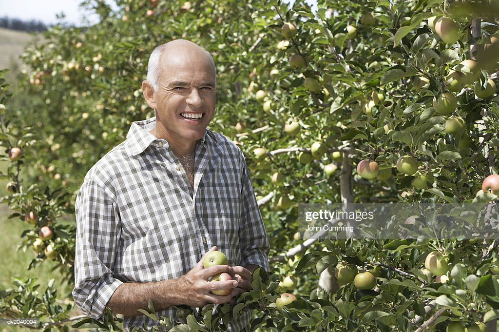 Portrait of a Farmer Standing Next to an Apple Tree : Stock Photo