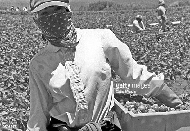 Portrait of a female farmworker, harvesting strawberries, and wearing layers of clothing to protect herself from hours of exposure to the sun and the...