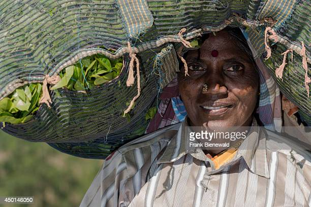 Portrait of a female tea plucker carrying a big bag full of tea leafs on her head