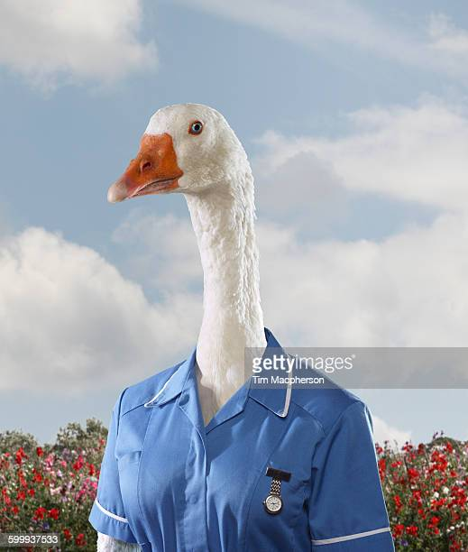 Portrait of a goose dressed as a nurse