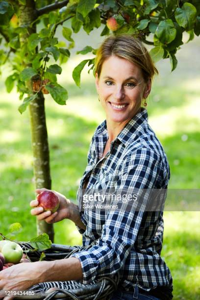 portrait of a handsome content middle-aged woman working in her garden picking up apple from an apple tree - une seule femme d'âge mûr photos et images de collection