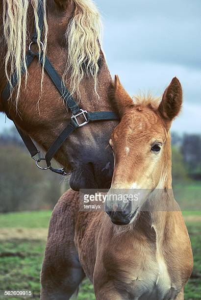Portrait of a horse and her foal