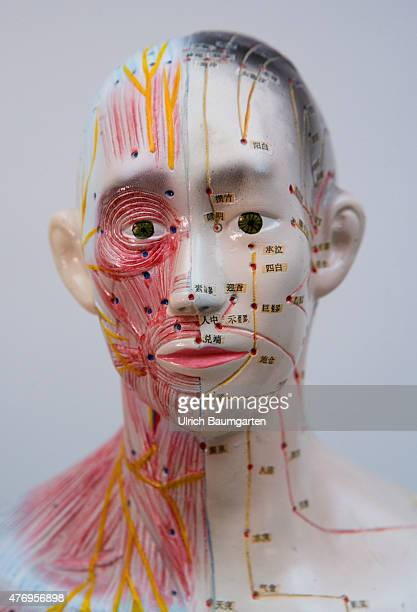 Portrait of a human figure male with acupuncture markings and the marking of individual points with Chinese characters