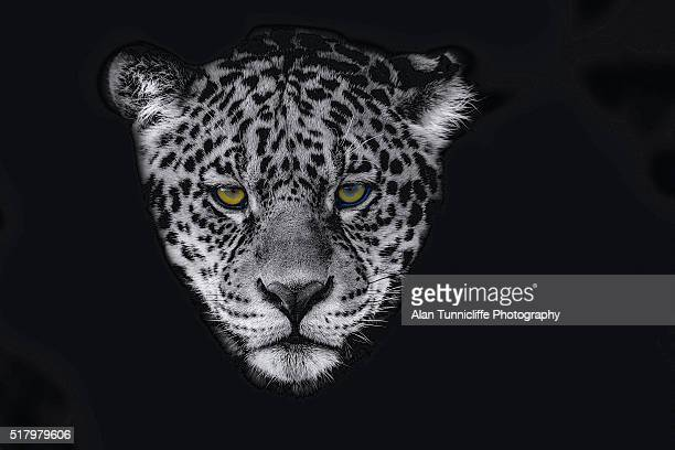 Portrait of a Jaguar