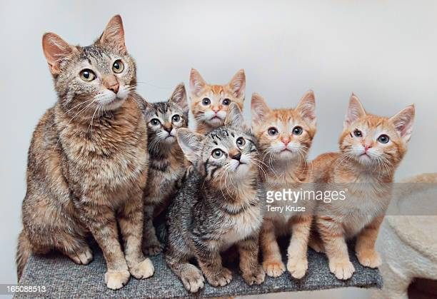portrait of a litter of kittens with ther momma