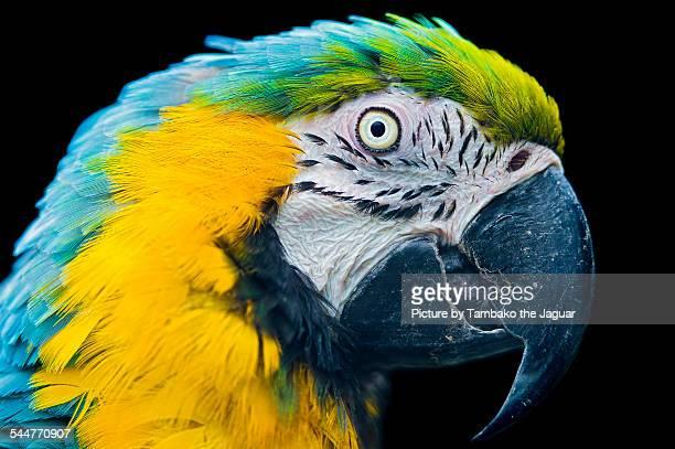 Portrait of a macaw