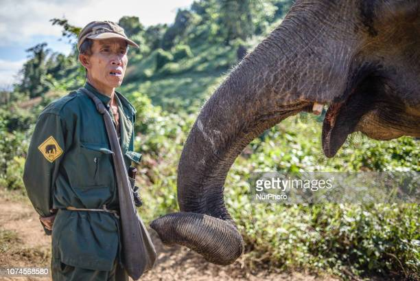 Portrait of a mahout with an elephant in the Elephant Conservation Center Sayaboury Laos in December 2018 Laos was known as The land of a million...