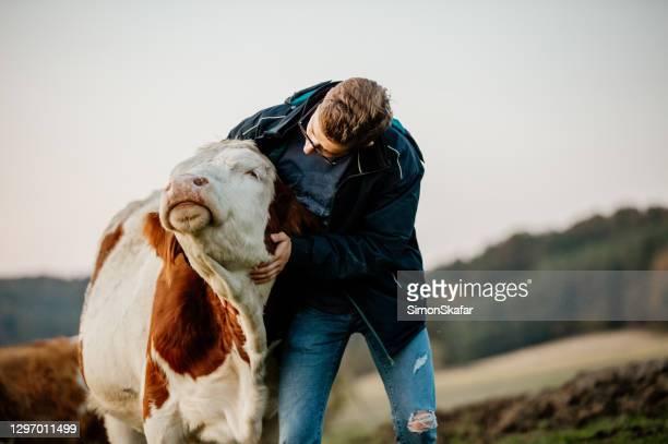 酪農場に立つ男性農家の肖像 - 家畜牛 ストックフォトと画像