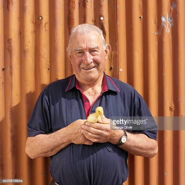 portrait of a man holding a duckling - day old chicks stock photos and pictures