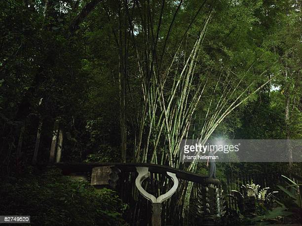 portrait of a man holding a light in the forest - las posas stock pictures, royalty-free photos & images