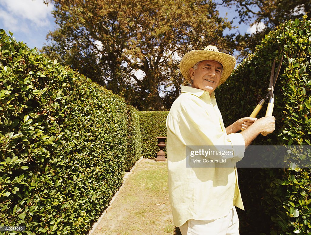 Portrait of a Man Pruning a Hedge in a Maze : Stock Photo