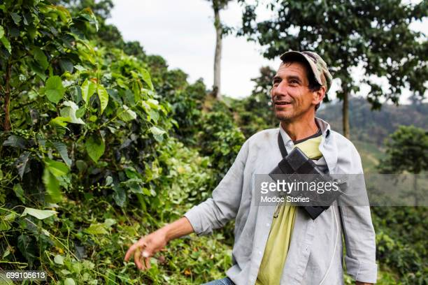 A portrait of a man working on a coffee farm while he harvests fresh beans in rural Colombia.