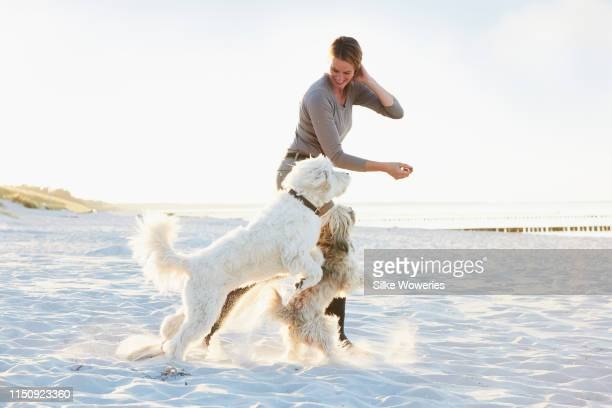 portrait of a mature happy woman playing with her dogs at the beach at sunset - image stock-fotos und bilder