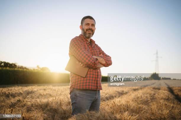 retrato de um fazendeiro moderno de meia idade de pé com os braços cruzados no campo de trigo ao pôr do sol - agricultura - fotografias e filmes do acervo