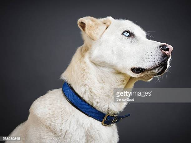 portrait of a mixed breed dog. - collar stock pictures, royalty-free photos & images