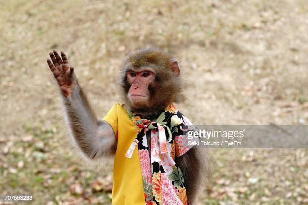 Portrait Of A Monkey Waving