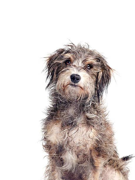 Portrait of a Mutt