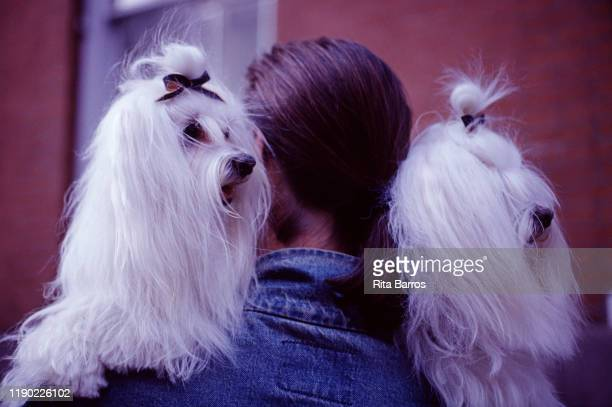 Portrait of a pair of dogs with matching bows on the shoulders of a person in a denim jacket New York New York 1994 The photo was taken as part of a...