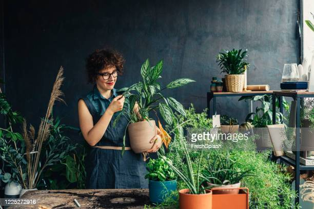 portrait of a plant shop owner looking at a plant lovingly - houseplant stock pictures, royalty-free photos & images