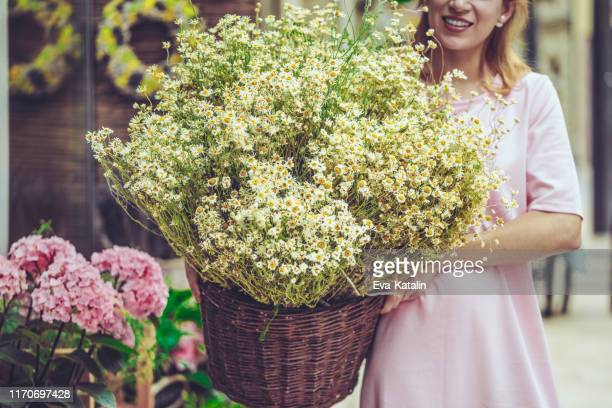 portrait of a proud florist - chamomile tea stock photos and pictures