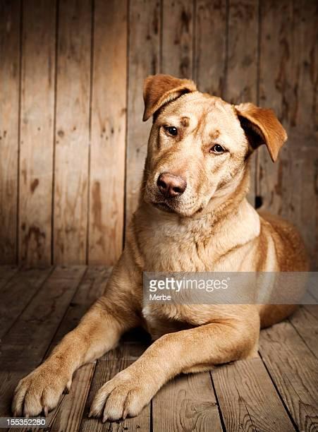 Retrato de um cão de cachorrinho