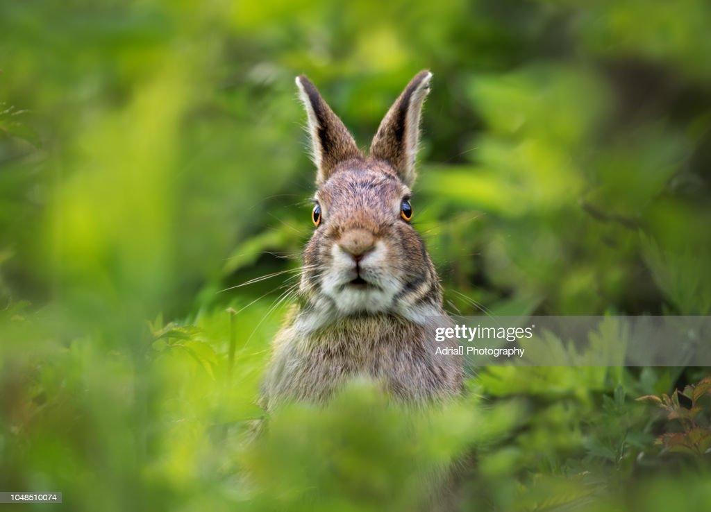 Portrait of a Rabbit : Stock-Foto