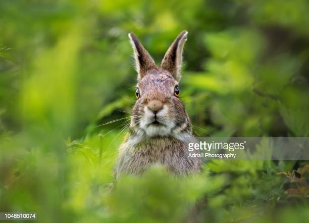 portrait of a rabbit - lagomorphs stock pictures, royalty-free photos & images