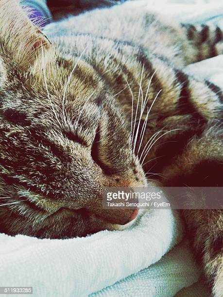 Portrait of a resting domestic cat