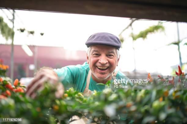 retrato de un florista mayor cuidando de algunas plántulas - pimientos fotografías e imágenes de stock