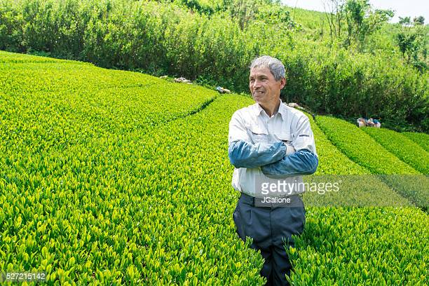 の肖像、シニア日本のお茶の農家