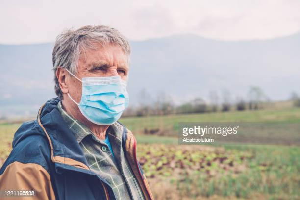 portrait of a senior man harvesting radicchio in the times of  coronavirus crisis - coronavirus winter stock pictures, royalty-free photos & images