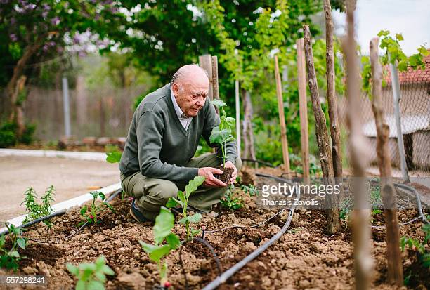 portrait of a senior man - horticulture stock pictures, royalty-free photos & images