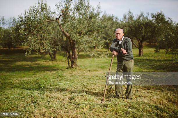 portrait of a senior man - orchard stockfoto's en -beelden