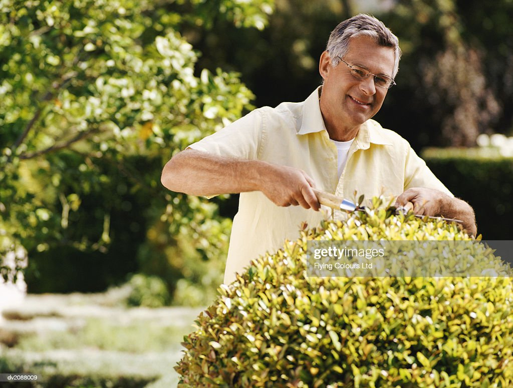 Portrait of a Senior Man Pruning a Hedge with Shears in a Domestic Garden : Stock Photo