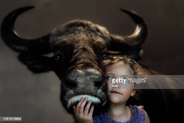 portrait of a smiling girl standing with an ox - close to stock pictures, royalty-free photos & images