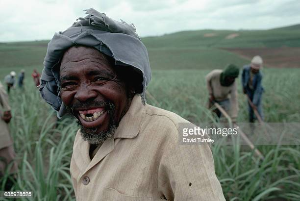 Portrait of a South African man working in sugar cane field near Durban Natal | Location near Durban South Africa