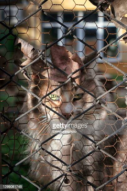 portrait of a street cat behind fence. - emreturanphoto stock pictures, royalty-free photos & images