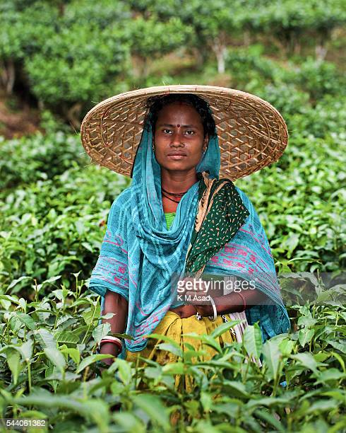 SRIMONGOL SYLHET DHAKA BANGLADESH Portrait of a tea plucker after collecting tea leaves Tea Plucking is a specialized skill Two leaves and a bud need...