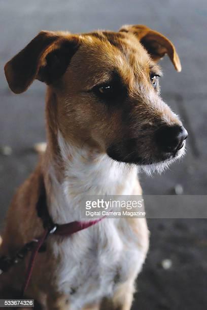 Portrait of a terrier dog taken on August 14 2015