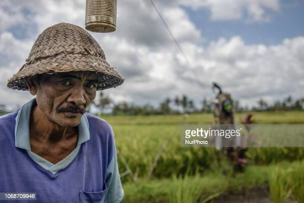 Portrait of a villager in a paddy field at the village near Ubud Ubud District Bali Indonesia in November 2018