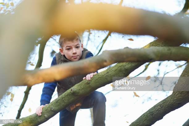 Portrait of a young boy climbing a beech tree