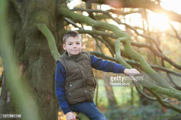 Portrait of a young boy sitting on the branch of a beech tree
